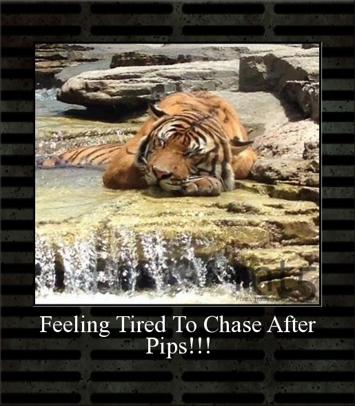 Feeling Tired To Chase After Pips!!!