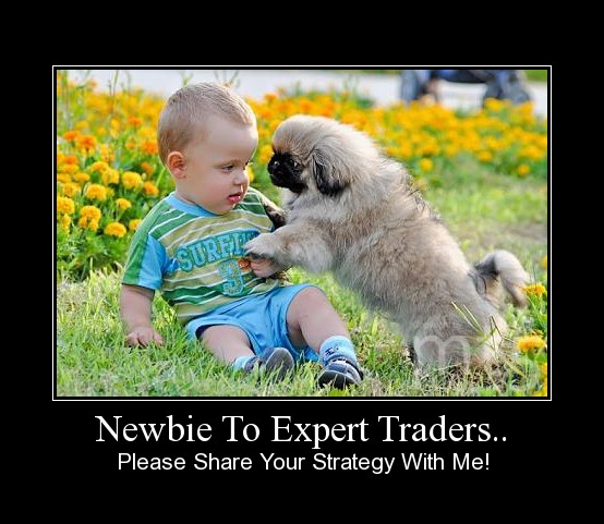 Newbie To Expert Traders..