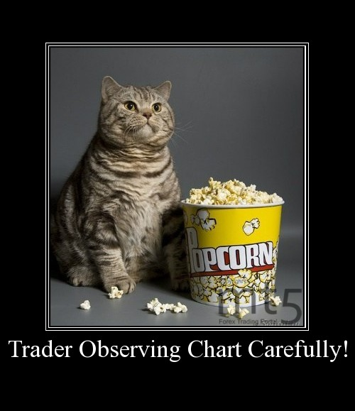 Trader Observing Chart Carefully!