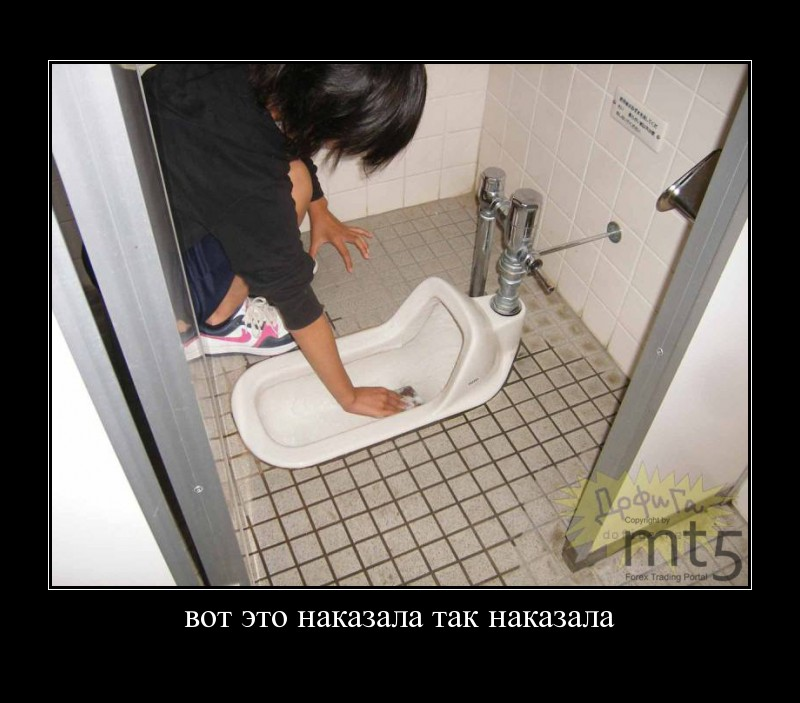 kot-lizhet-tualet