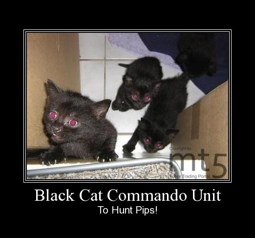 Black Cat Commando Unit
