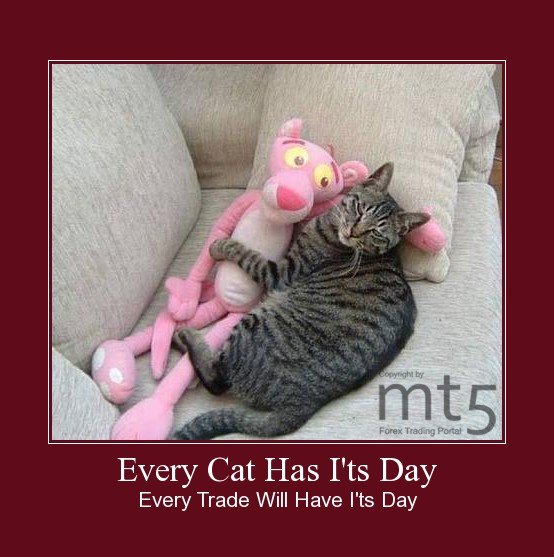 Every Cat Has I'ts Day