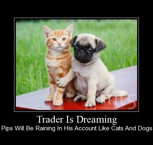 Trader Is Dreaming