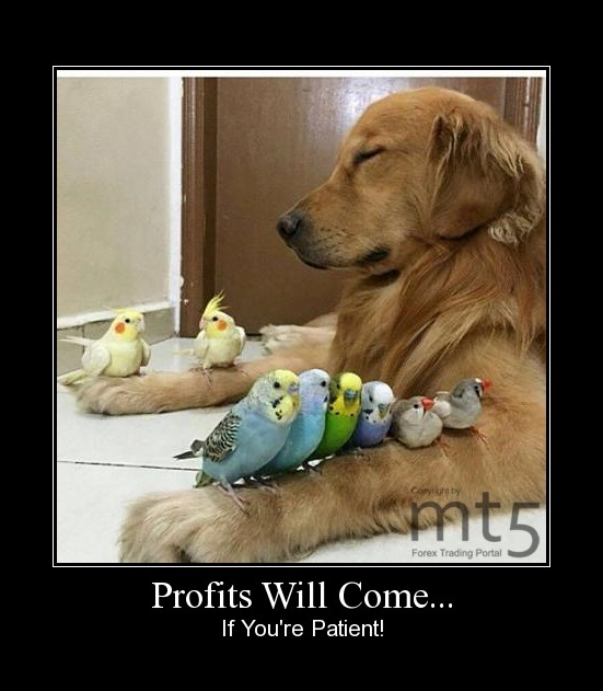 Profits Will Come...