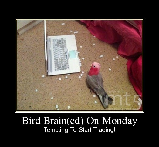 Bird Brain(ed) On Monday
