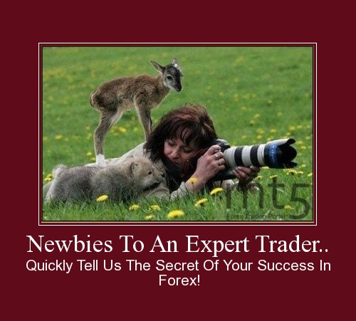 Newbies To An Expert Trader..