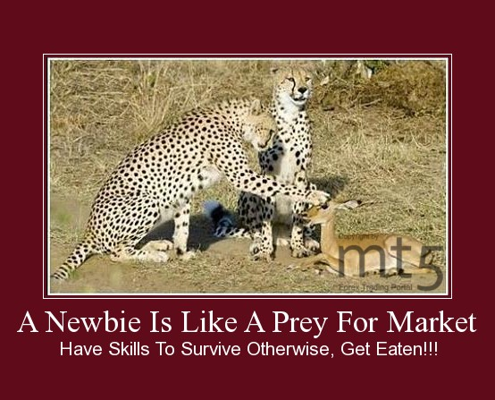 A Newbie Is Like A Prey For Market