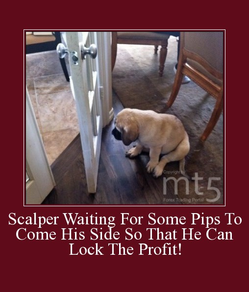 Scalper Waiting For Some Pips To Come His Side So That He Can Lock The Profit!