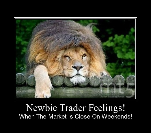 Newbie Trader Feelings!