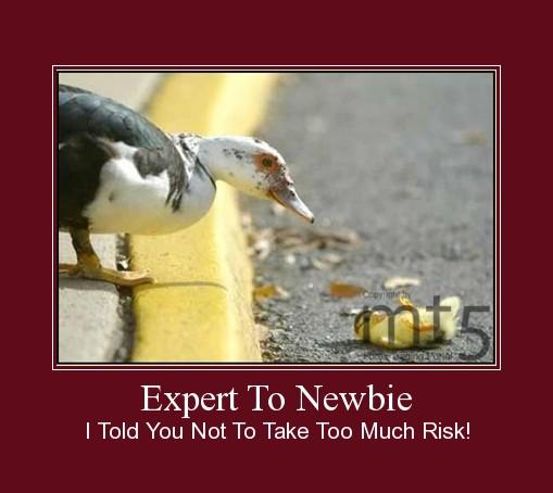 Expert To Newbie