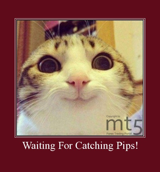 Waiting For Catching Pips!