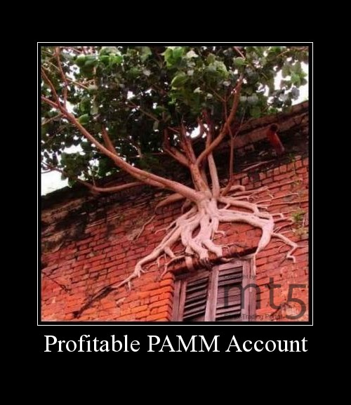 Profitable PAMM Account