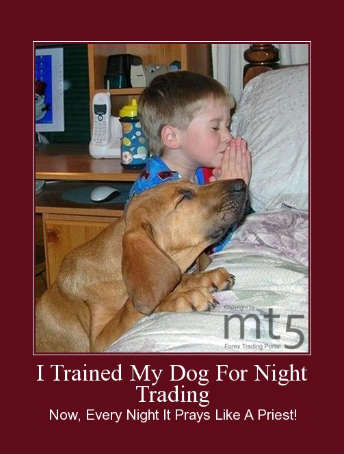 I Trained My Dog For Night Trading