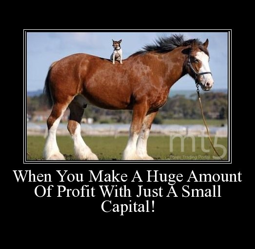 When You Make A Huge Amount Of Profit With Just A Small Capital!
