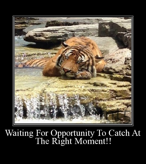 Waiting For Opportunity To Catch At The Right Moment!!