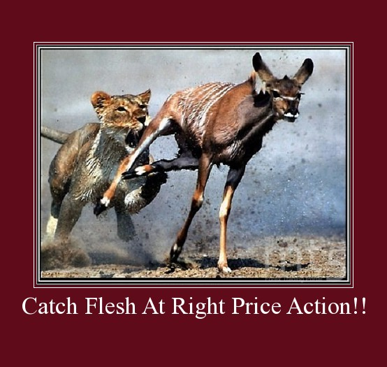 Catch Flesh At Right Price Action!!