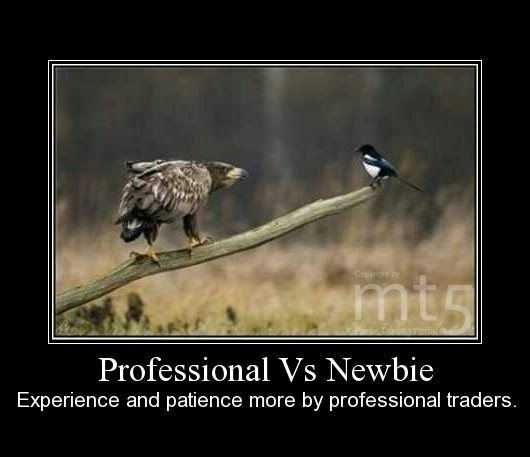 Professional Vs Newbie