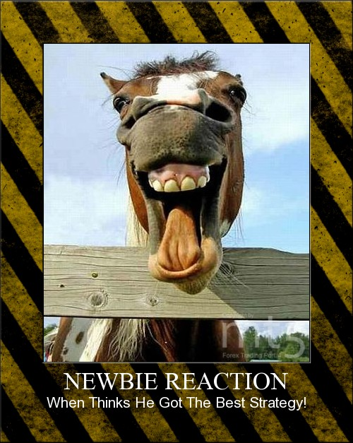 NEWBIE REACTION