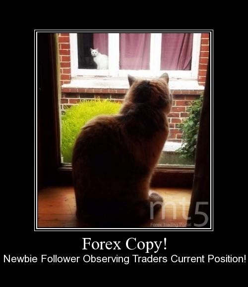 Forex Copy!