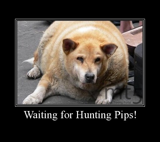 Waiting for Hunting Pips!