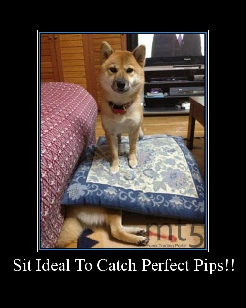 Sit Ideal To Catch Perfect Pips!!