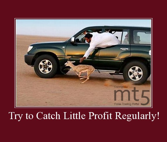 Try to Catch Little Profit Regularly!