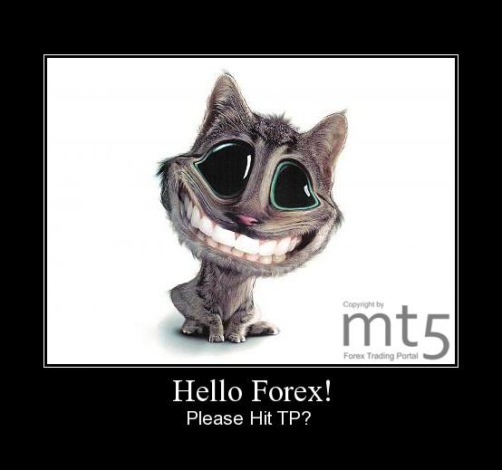 Hello Forex!