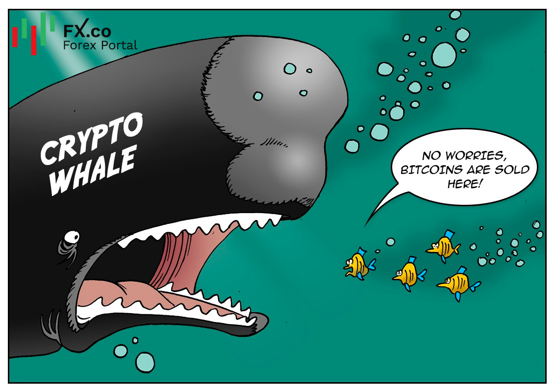 Holding over 80% of BTC value, crypto whales rattle market