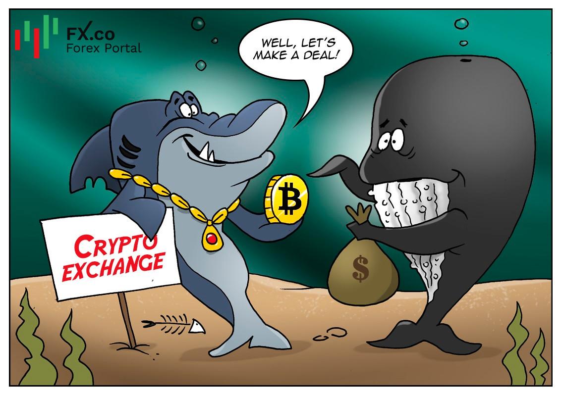 Crypto Whales Isi Dompet Mereka dengan BTC Selama Keruntuhan Pasar