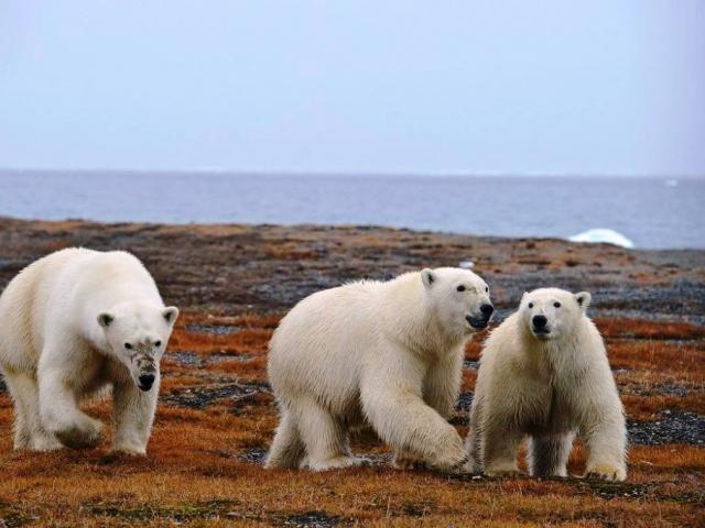 opsi broker interaktif tidak berlaku beruang kutub forex