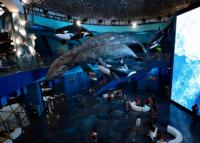 Крупнейшие океанариумы России
