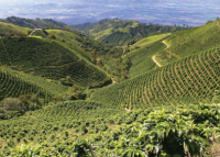 Top 5 coffee-producing countries