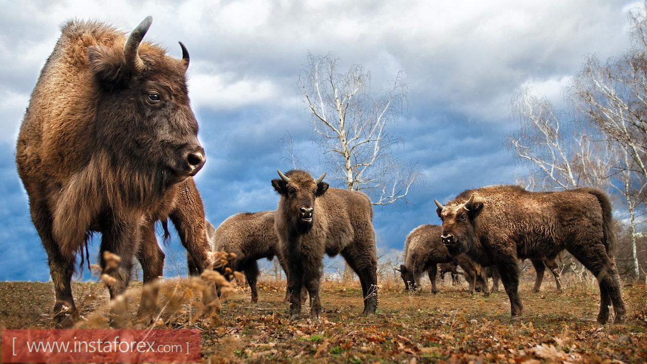 Не грози степному бизону